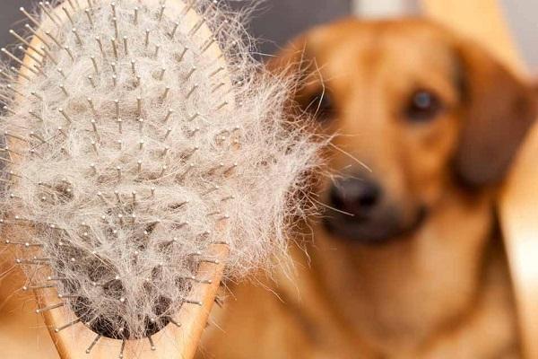 Woofland - 10 tips για λιγότερες τρίχες του σκύλου μέσα στο σπίτι - Άνθρωπος και σκύλος