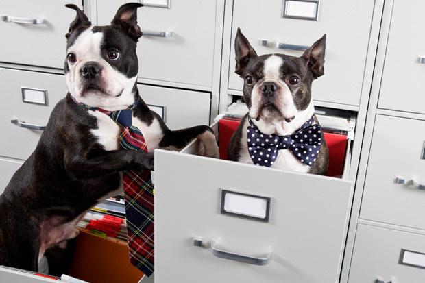 21 Ιουνίου:Ημέρα που παίρνουμε το σκύλο στη δουλειά Woofland