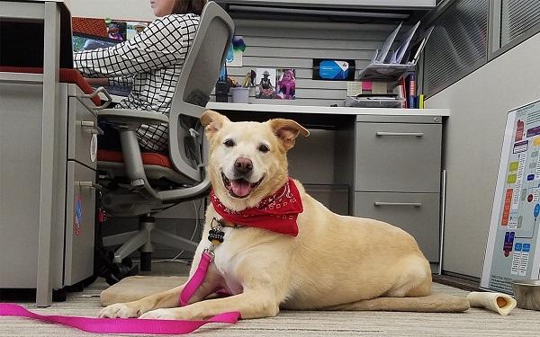 Woofland - 21  Ιουνίου Ημέρα που παίρνουμε το σκύλο στη δουλειά - Άνθρωπος και σκύλος
