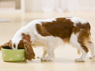 3 tips για να τρώει ο σκύλος μου πιο αργά
