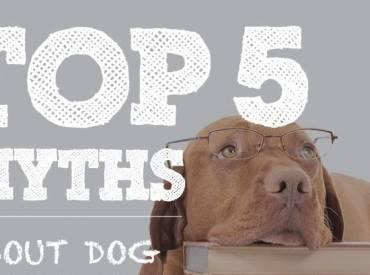 5 μύθοι για τους σκύλους – Επιστήμη και ενημέρωση Woofland