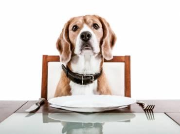 5 tips για να αλλάξω την διατροφή του σκύλου μου