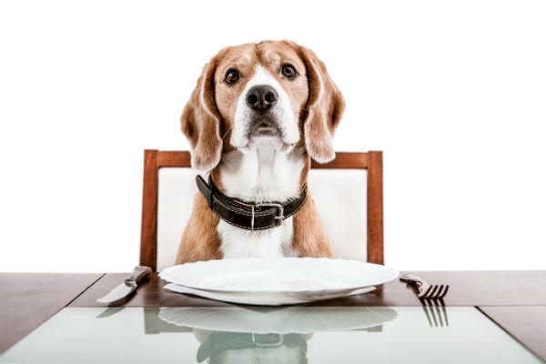 5tips για να βοηθήσουμε το σκύλο μας να χάσει βάρος Woofland