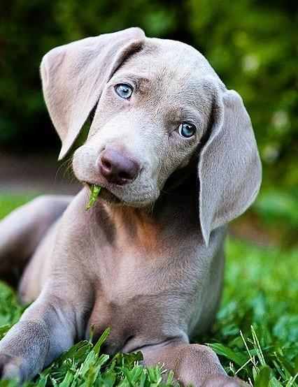 Woofland - 6 Λόγοι που θέλω να γίνω σαν το σκύλο μου - Άνθρωπος και σκύλος