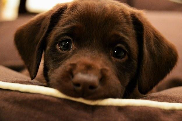 Απόκτηση σκύλου μια πολυ σοβαρή απόφαση