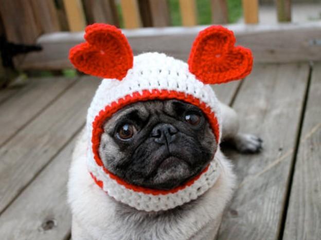 Woofland - Be my valentine dog - Γουφαμάρες - Αστείες φωτογραφίες σκύλων 1