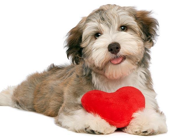 Woofland - Be my valentine dog - Γουφαμάρες - Αστείες φωτογραφίες σκύλων 2