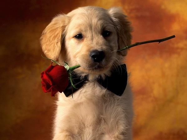 Woofland - Be my valentine dog - Γουφαμάρες - Αστείες φωτογραφίες σκύλων 3