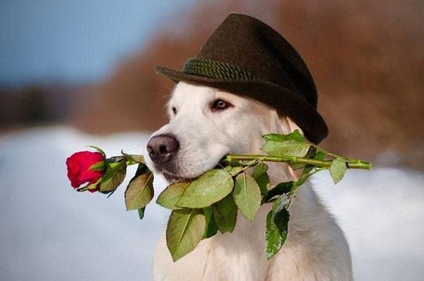 Woofland - Be my valentine dog - Γουφαμάρες - Αστείες φωτογραφίες σκύλων 4