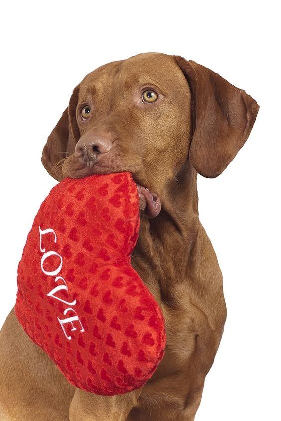 Woofland - Be my valentine dog - Γουφαμάρες - Αστείες φωτογραφίες σκύλων 5