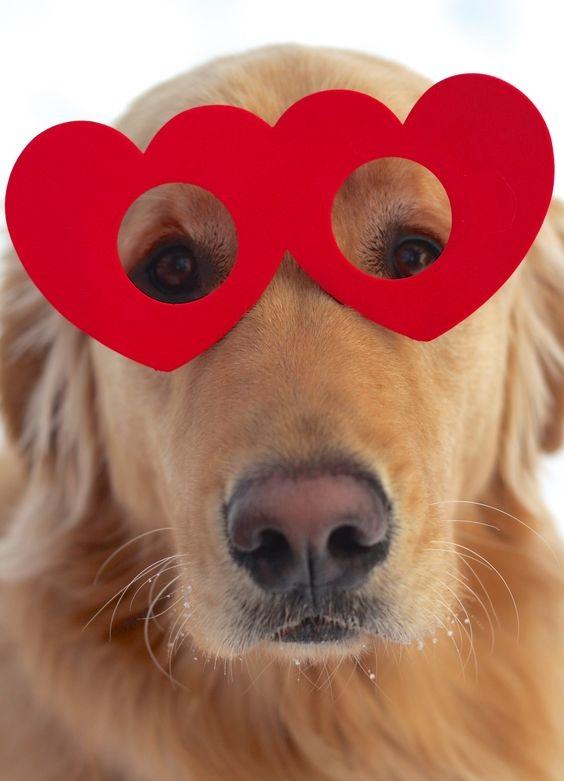 Woofland - Be my valentine dog - Γουφαμάρες - Αστείες φωτογραφίες σκύλων 6