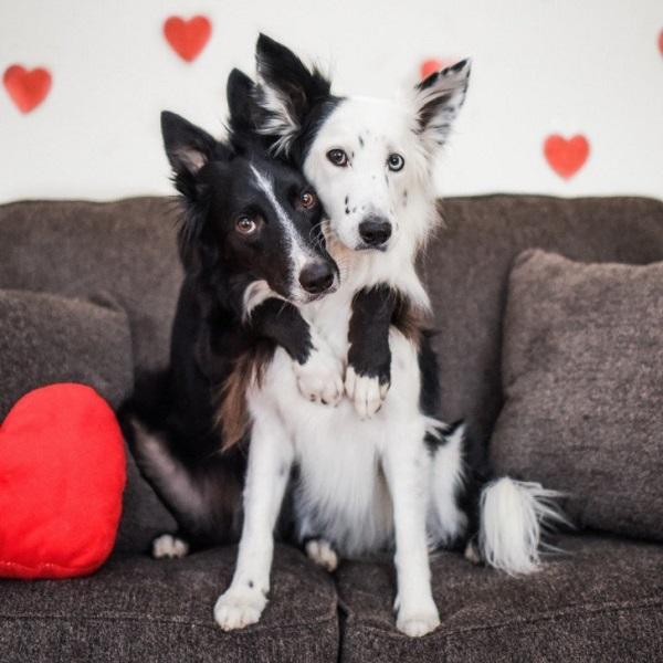 Woofland - Be my valentine dog - Γουφαμάρες - Αστείες φωτογραφίες σκύλων 7