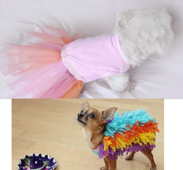 Woofland - DIY Αποκριάτικες στολές για σκύλους Άνθρωπος και σκύλος  5a