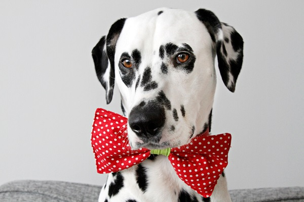 Woofland - DIY Αποκριάτικες στολές για σκύλους Άνθρωπος και σκύλος  8a