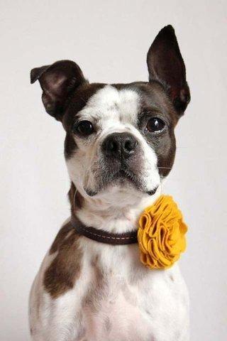 Woofland - DIY Αποκριάτικες στολές για σκύλους Άνθρωπος και σκύλος