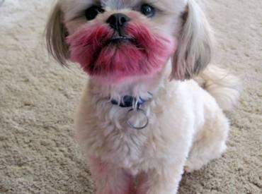 Τι κάνει ο σκύλος όταν λείπω Αστείες φωτογραφίες Woofland