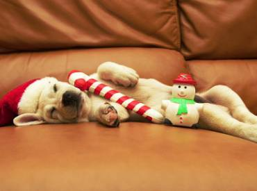 Woofland – 12 σκύλοι μας εύχονται Χαρούμενα Χριστούγεννα