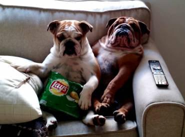 Dog couples – Αστείες φωτογραφίες σκύλων με το ταίρι τους