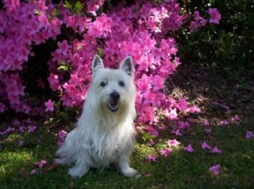 10 φωτογραφίες σκύλων ανάμεσα σε λουλούδια! Woofland