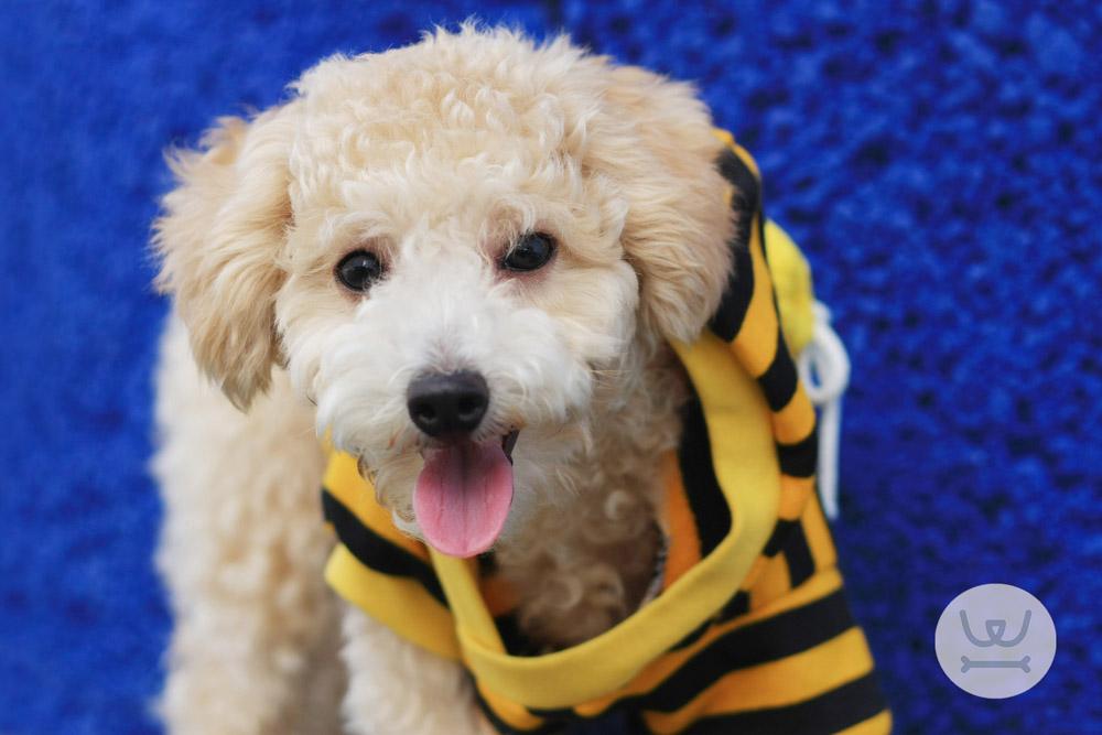 Woofland - Ιστορίες για σκύλους - Με λένε Γκαστόν 4o
