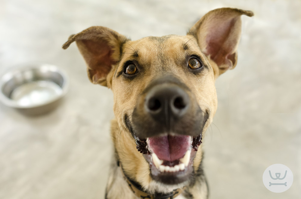 Woofland - Απόκτηση σκύλου μια πολύ σοβαρή απόφαση