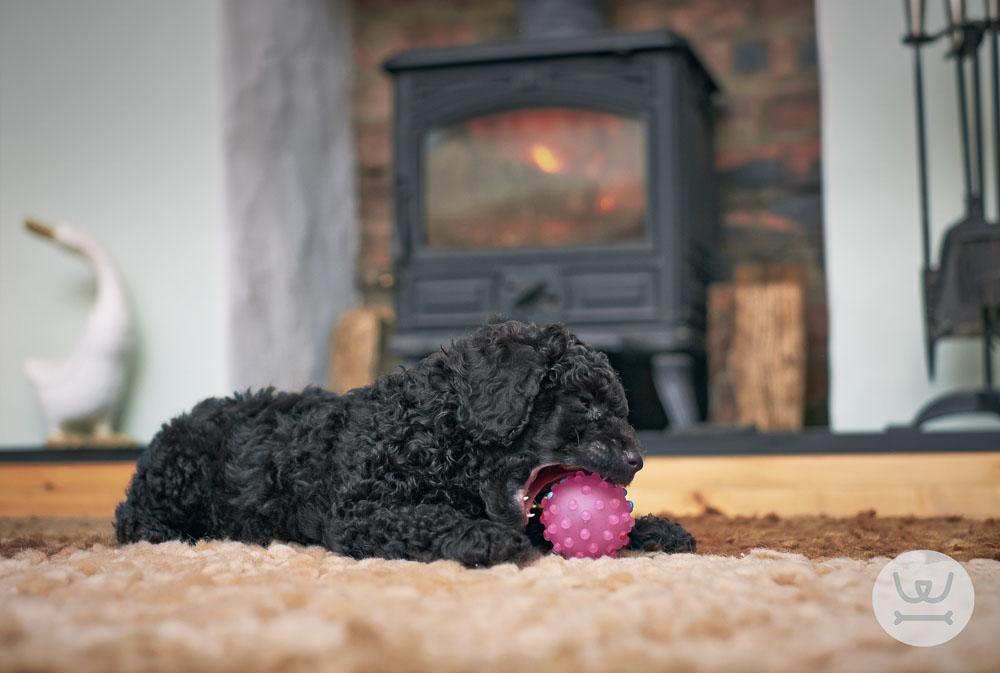 Ιστορίες για σκύλους – Με λένε Γκαστόν.. (4ο)