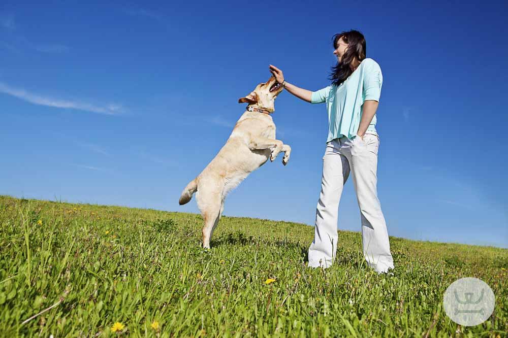 Woofland | πόσο έξυπνος είναι ο σκύλος μας