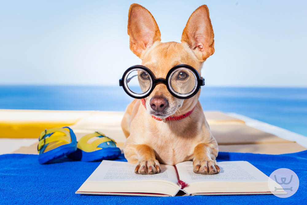 Woofland – Πόσο έξυπνος είναι ο σκύλος μας;