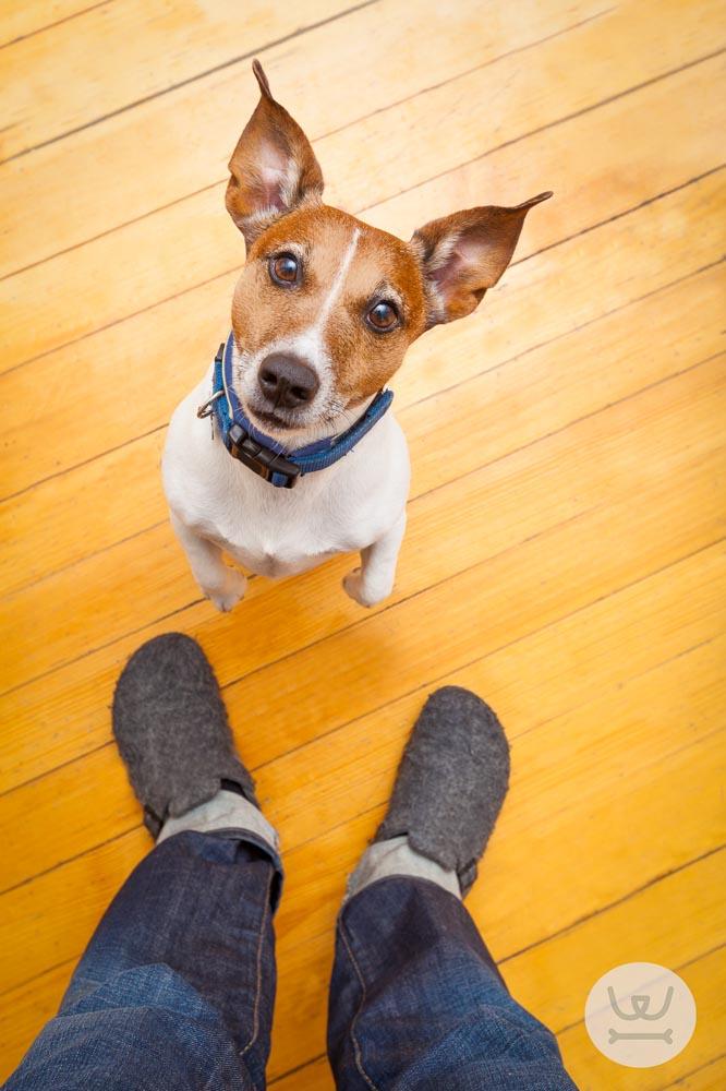 Woofland - όνομα του σκύλου