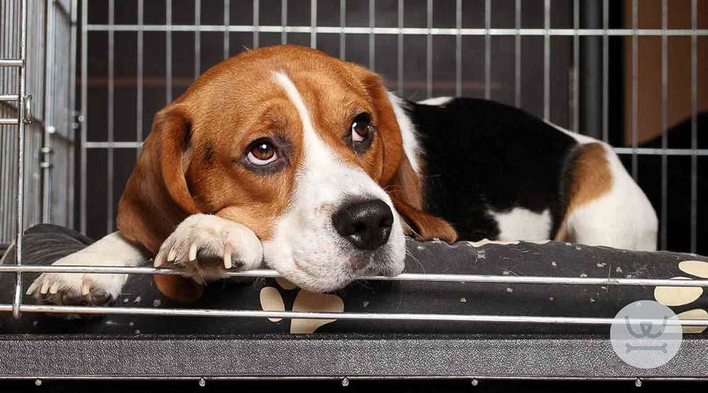 Βίντεο: Εκπαίδευση σκύλου σε κρέιτ (crate) 1/2