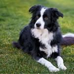 Woofland - Βίντεο: Start Button συμπεριφορές σκύλων - Εκπαίδευση σκύλω