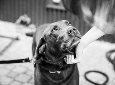 Γιατί ο σκύλος μου με κοιτάει στα μάτια – Woofland