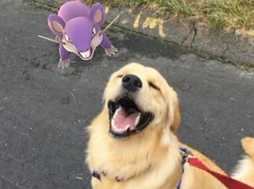 Γουφαμάρες Αστείες φωτογραφίες σκύλων Pokemon go