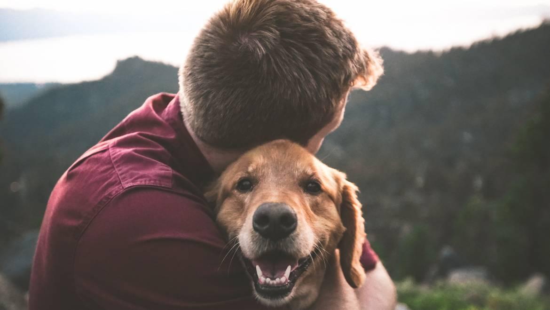 Aγάπη: η μυστική υπερδύναμη των σκύλων
