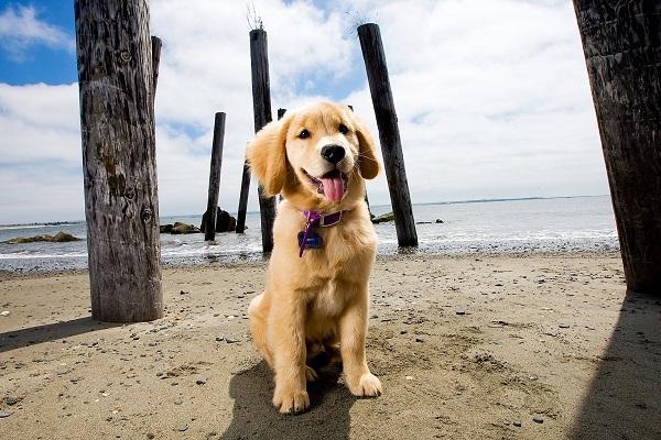 Βίντεο: Πως να μάθω στο σκύλο μου την εντολή «κάτσε»