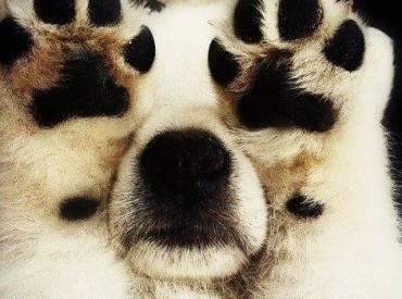 Ο σκύλος μου κρύβεται. 14 σκύλοι που νομίζουν ότι κρύφτηκαν