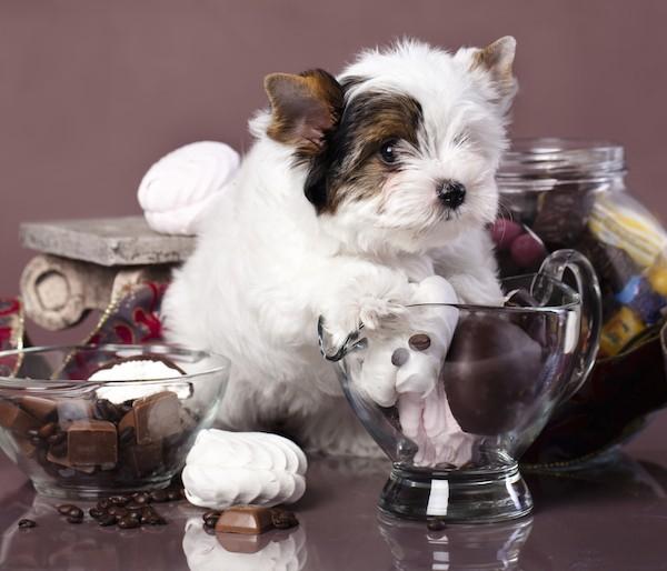 Χριστούγεννα! Ποιοι κίνδυνοι απειλούν το σκύλο μας!!!
