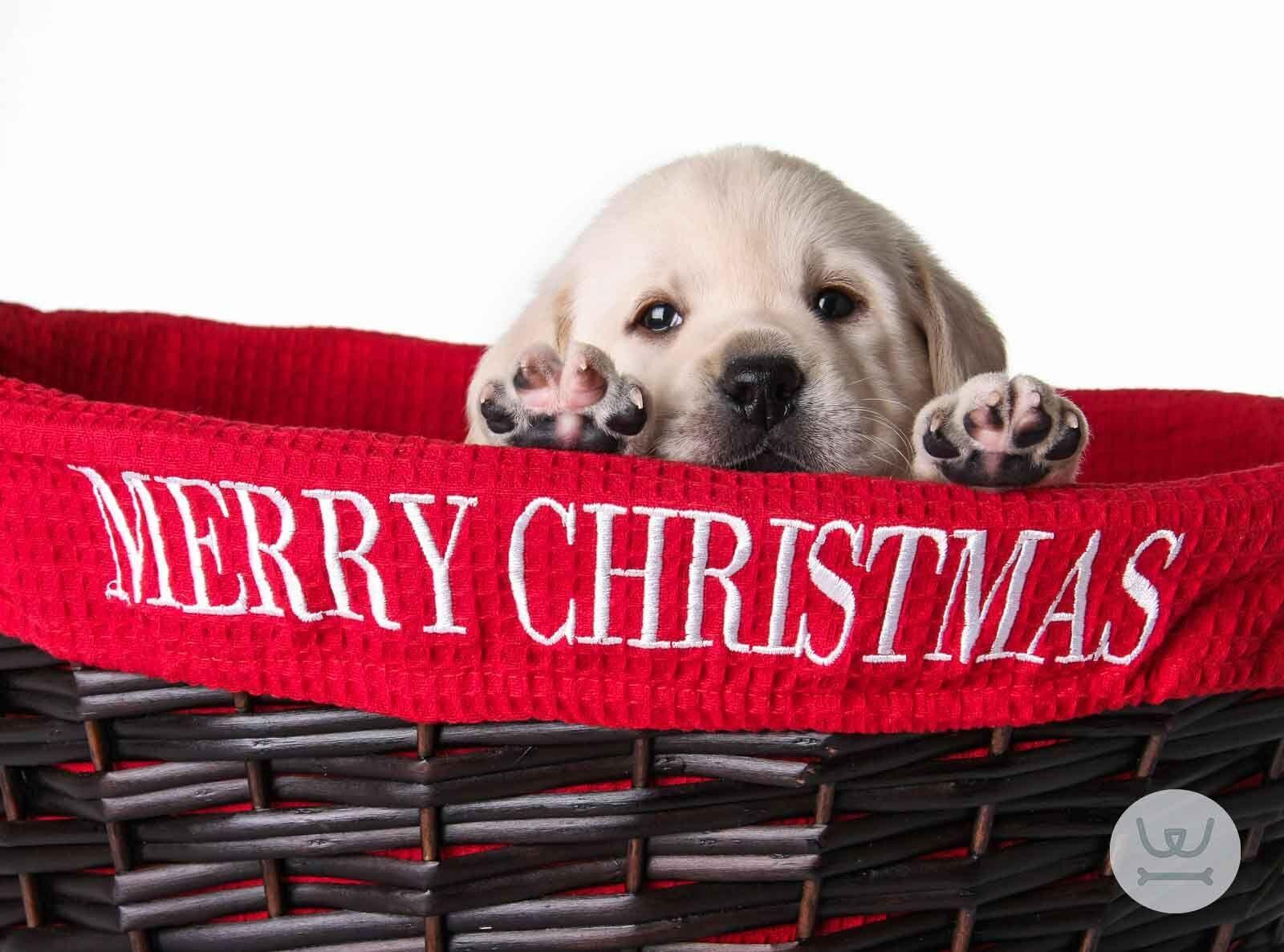 woofland - ένα κουταβάκι για τα Χριστούγεννα