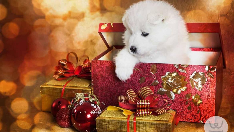 Ένα κουταβάκι για τα Χριστούγεννα;