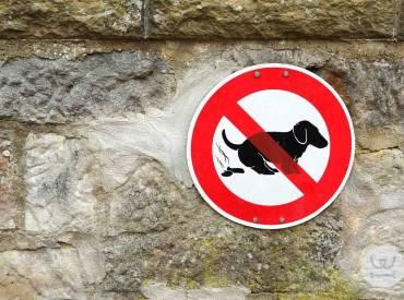 Καθημερινές συμβουλές για το σκύλο μου 11ο – Ακαθαρσίες σκύλου