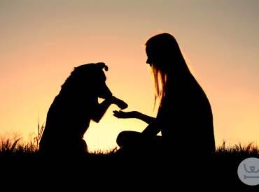 Εκπαίδευση σκύλου με ανταμοιβή (λιχουδιές). Αλήθειες-μύθοι.