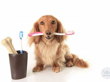 Καθημερινές συμβουλές 12ο – Οδοντόβουρτσα για το σκύλο μου;