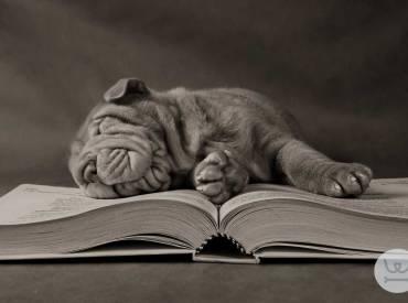 Σκύλος και όνειρα! Σκύλος ονειροκρίτης