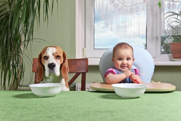 Πώς είναι οι τρόποι του σκύλου σας στο τραπέζι;