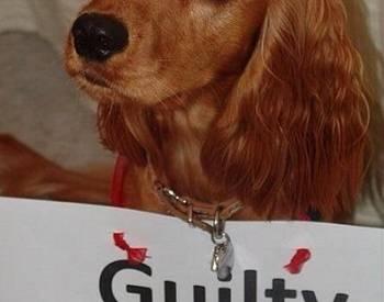 13 φωτογραφίες από διαβόητους σκύλο ένοχους!