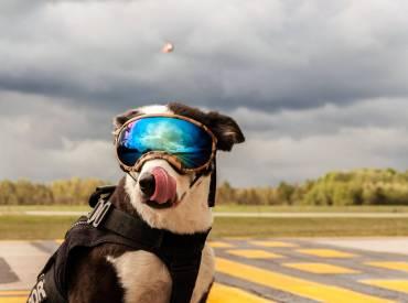 Γνωρίστε τον Piper, έναν διαφορετικό σκύλο εργασίας!