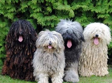 14 + 1 φωτογραφίες σκύλων που μας βγάζουν την γλώσσα! TongueOutTuesday 1ο